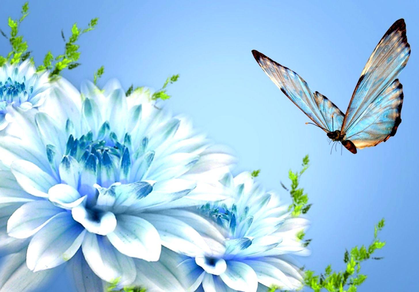 Nature Butterfly 4k Wallpaper Gallery Dengan Gambar