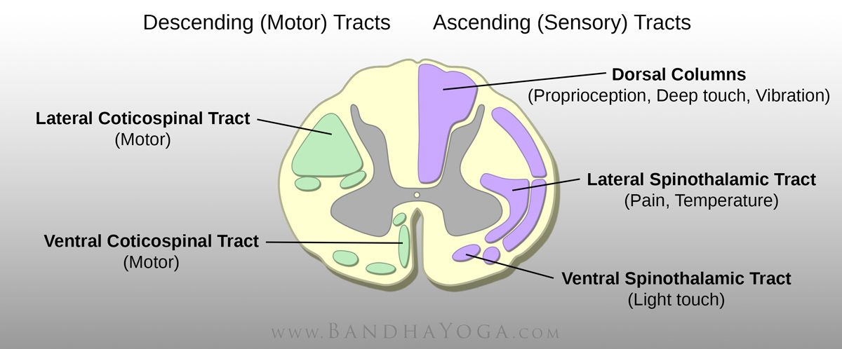 The Daily Bandha: Preventing Yoga Injuries vs Preventing Yoga, Part. Awsome website !