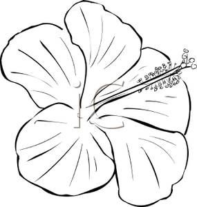 Flower Black And White Clipart 34630 Flower Drawing Design Flower Drawing