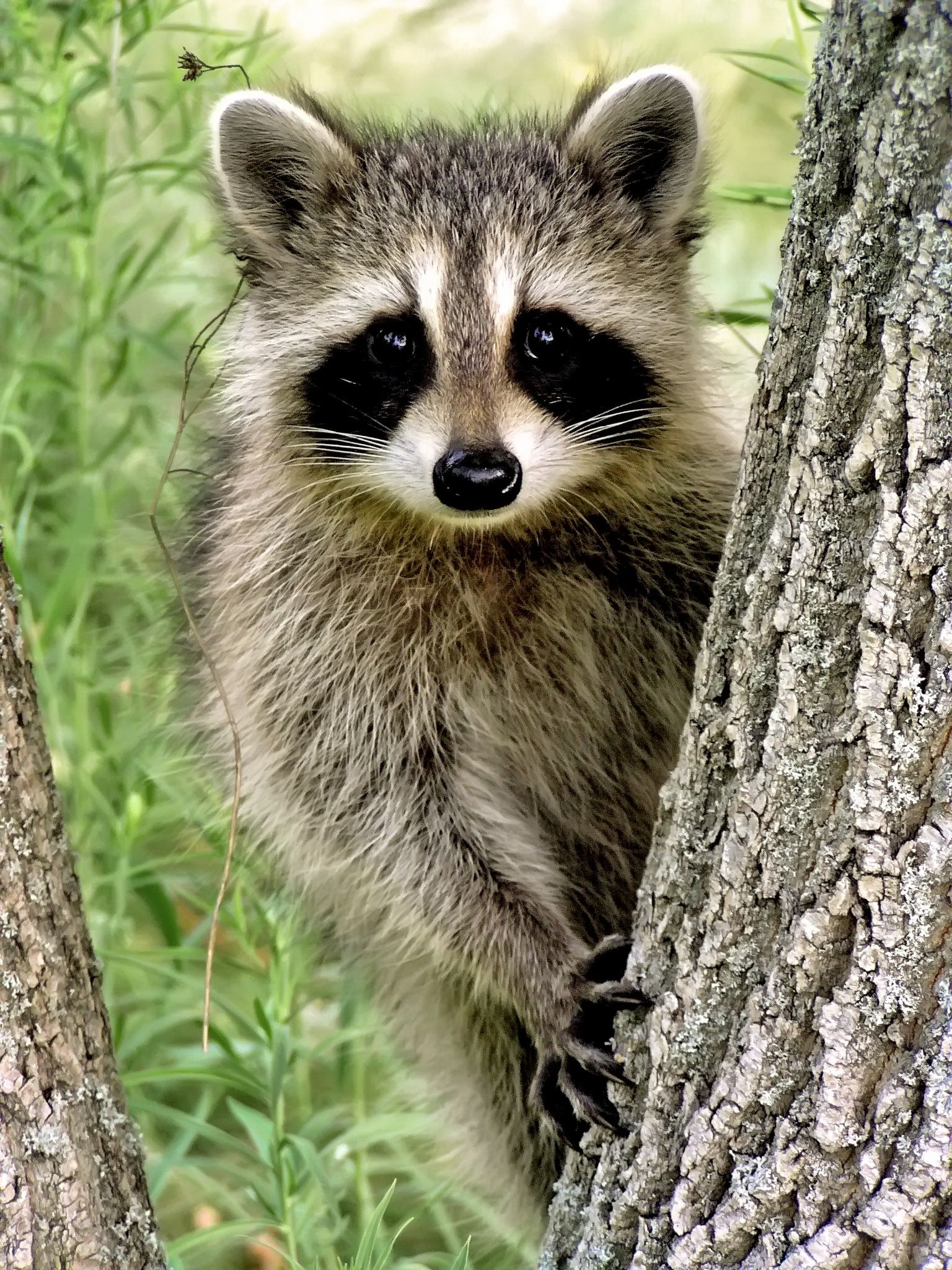 Racoon by Helen Filatova on 500px Fauna Wild Ones