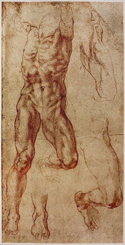 Anatomy By Michelangelo Pinterest Michelangelo