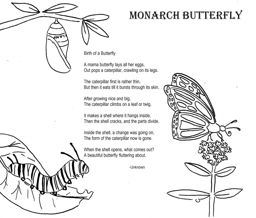 Butterfly cocoon coloring pages - Monarch Butterfly Coloring Poem