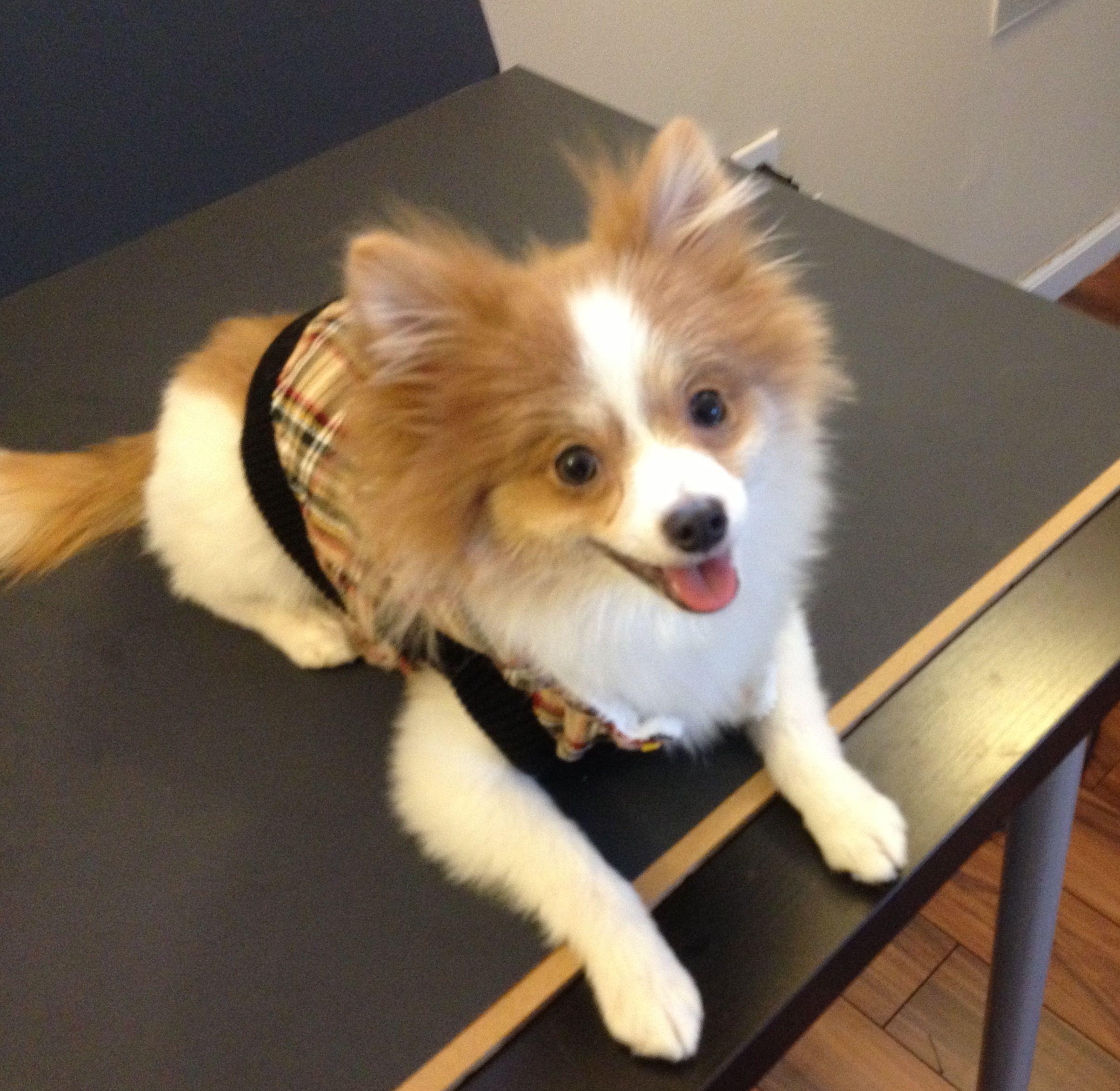 Plaid Hooded Dog Jacket | Pets | Pinterest | Dogs, Cute ...