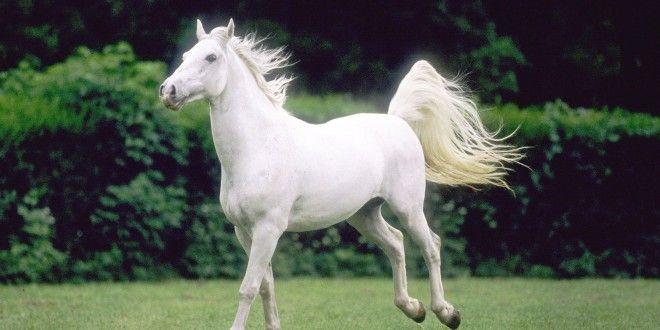 White Camarillo Wild Horse Wallpaper Free Download Hd Wallpapers