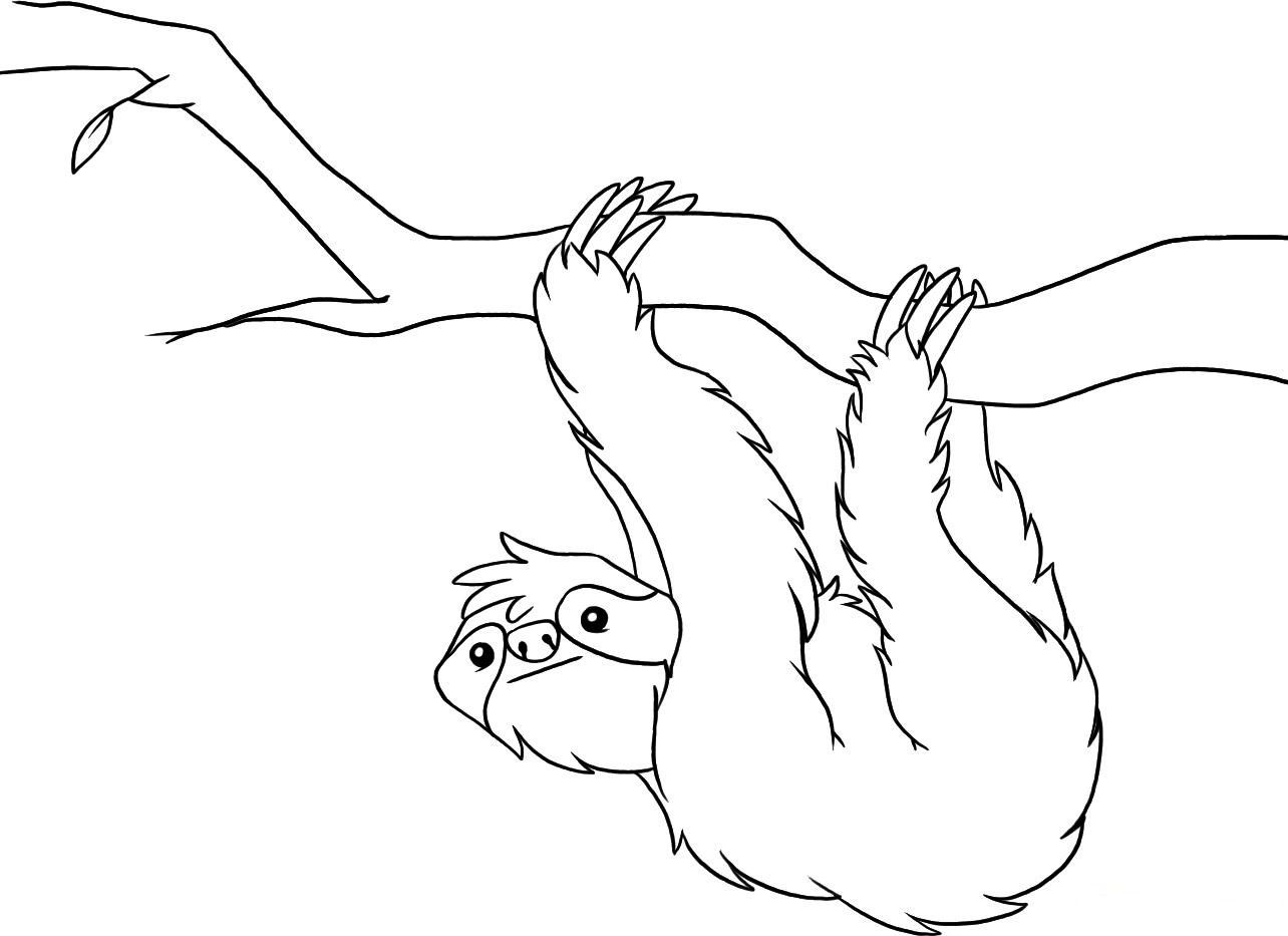 printable sloth coloring pages  rainforest animals