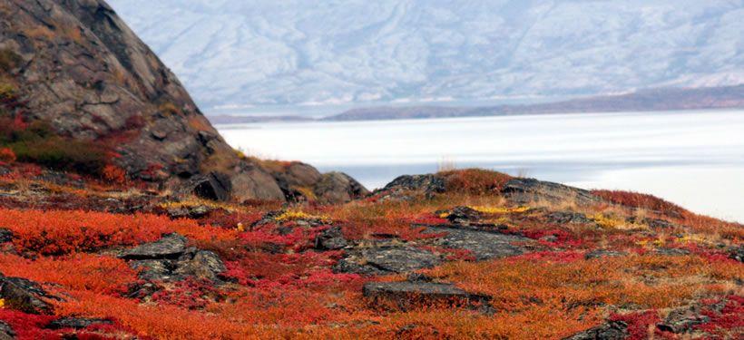 Autumn on the tundra (Photo by Carolyn Mallory)