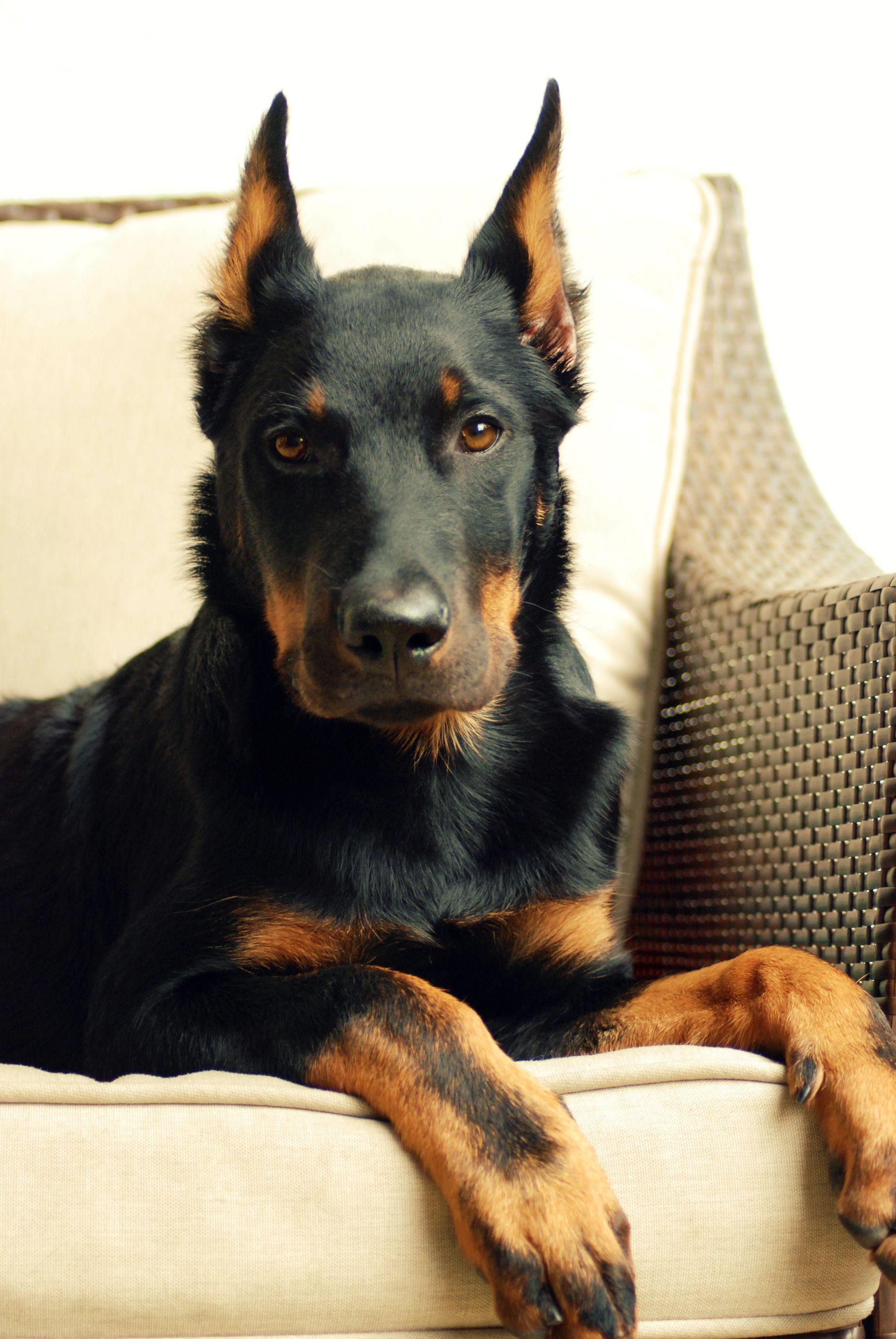 pin von cat man du auf doggies pinterest hund und katze hunde und katzen. Black Bedroom Furniture Sets. Home Design Ideas
