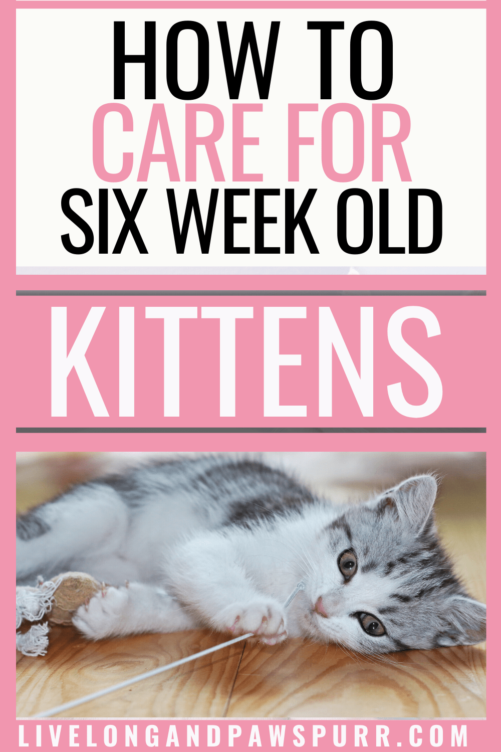 The Complete Guide To 6 Week Old Kittens Live Long And Pawspurr In 2020 6 Week Old Kitten Kitten Care Taking Care Of Kittens