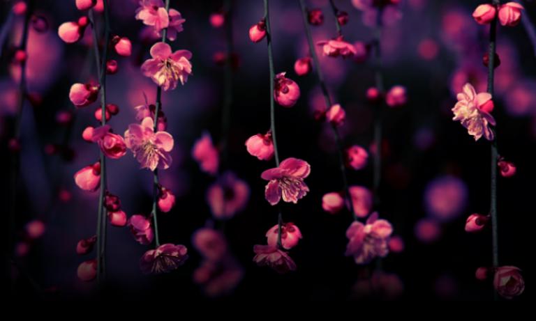 Islamic Worksheets Arabic Dua 5 8 Age Spring Flowers Wallpaper Best Facebook Cover Photos Facebook Cover Photos Flowers