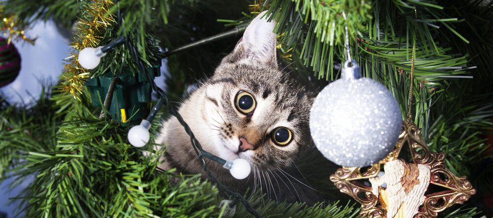 How to Keep Your Cat Out of the Christmas Tree in 2020