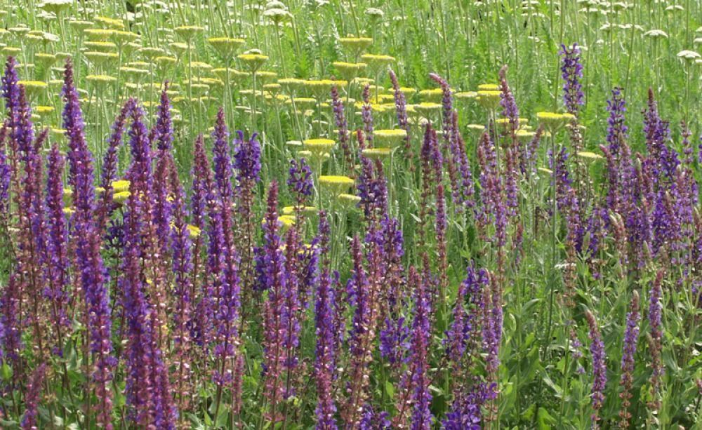 die schönsten wildstauden für trockenen boden   steif, Garten ideen