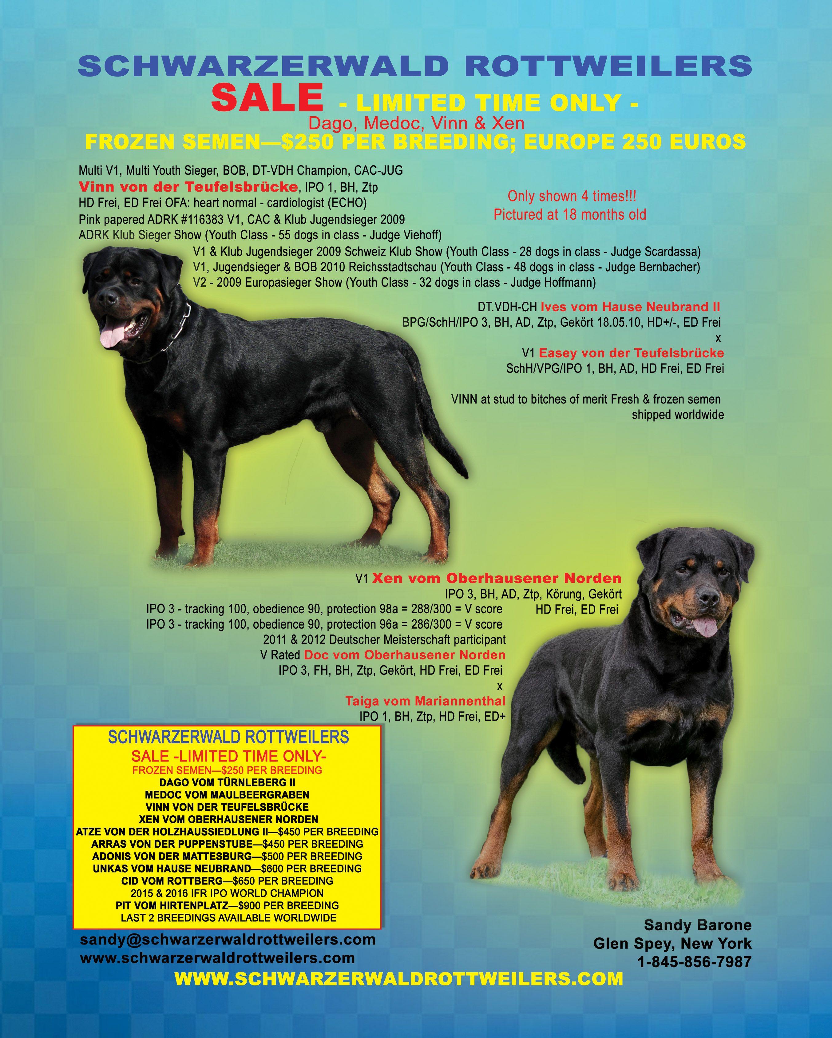 Schwarzerwald Rottweilers Sandy Barone Glen Spey New York 917 681