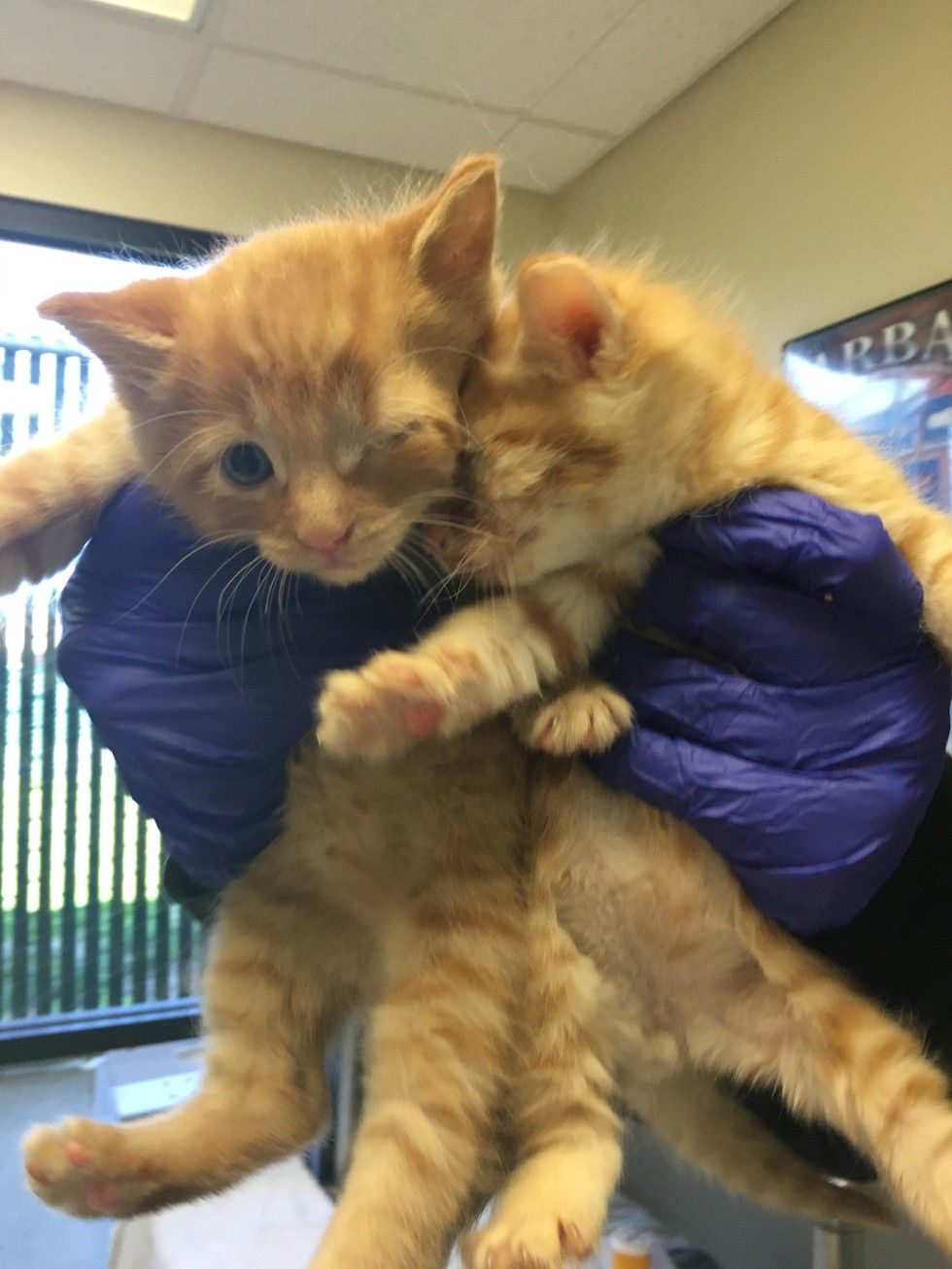 Rescue Dog Mothers Orphaned Kittens But Now She Goes Above And Beyond To Save Their Lives Rescue Dogs Kittens Cats And Kittens