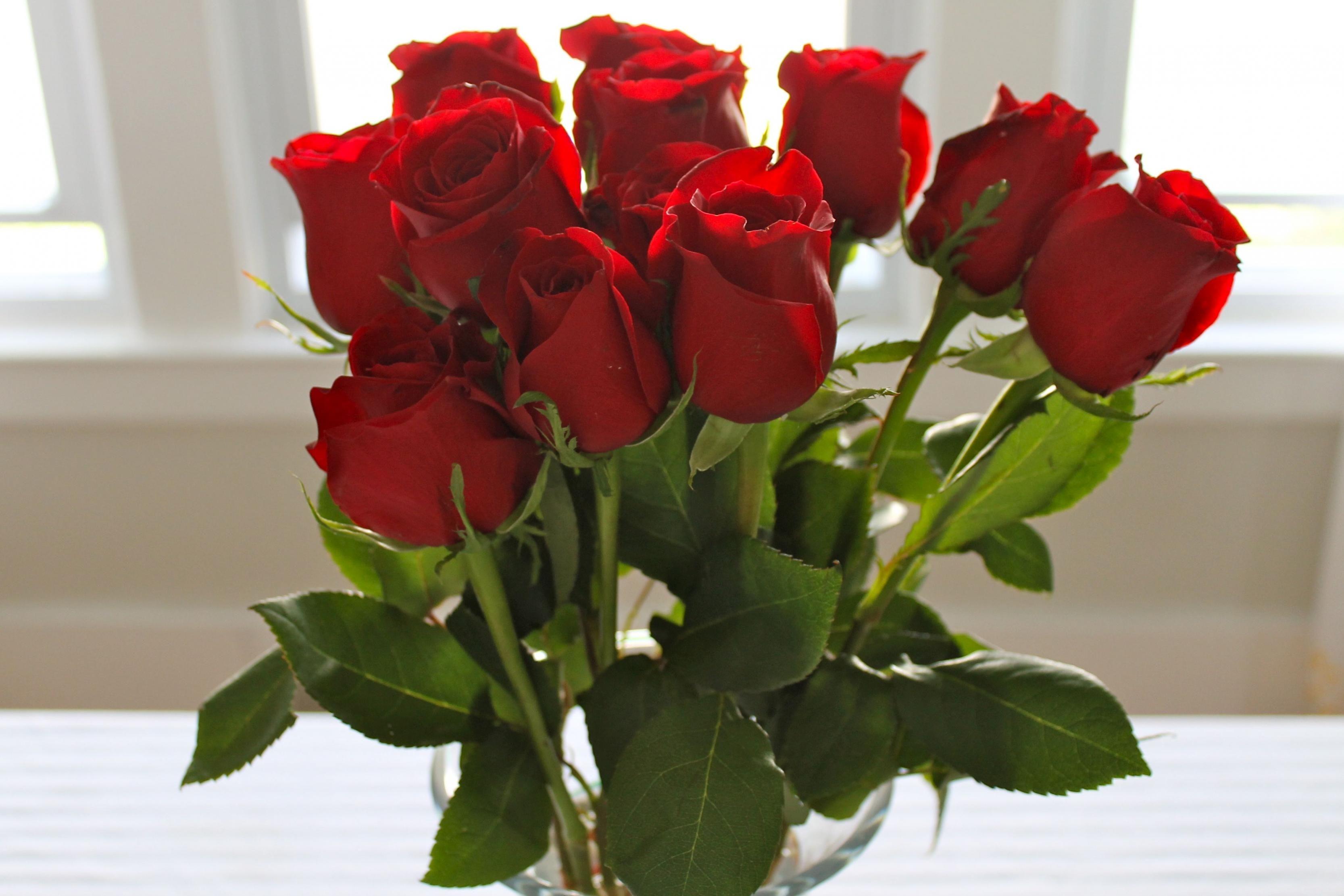 اجمل صورة وردة ورود حمراء جميلة روعه Red Rose Pictures Rose Rose Color Meanings