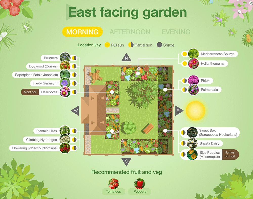 Plant Suggestions For A North South East Or West Facing Garden West Facing Garden East Facing Garden North Facing Garden
