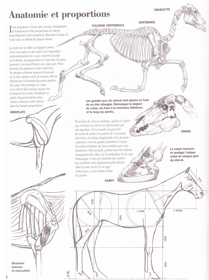 les proportions du cheval | Anatomie | Pinterest | Anatomía ...