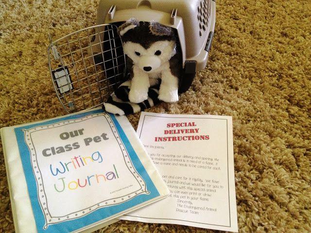 Classroom Pet Ideas ~ Best class pet ideas on pinterest quiet critters
