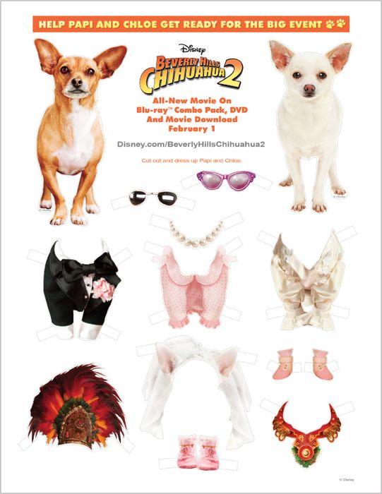 Запашный дрессировка собак
