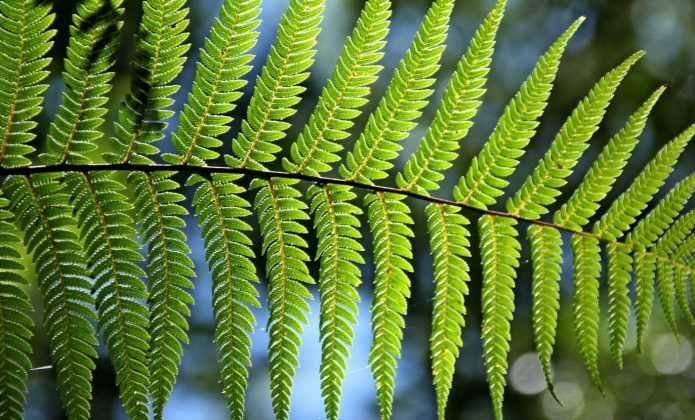 10 Plantes Exotiques Et Rustiques Pour Jardin Jungle Avec Images