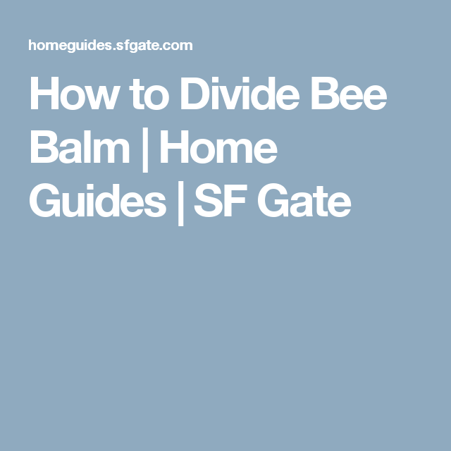 How to Divide Bee Balm | Home Guides | SF Gate