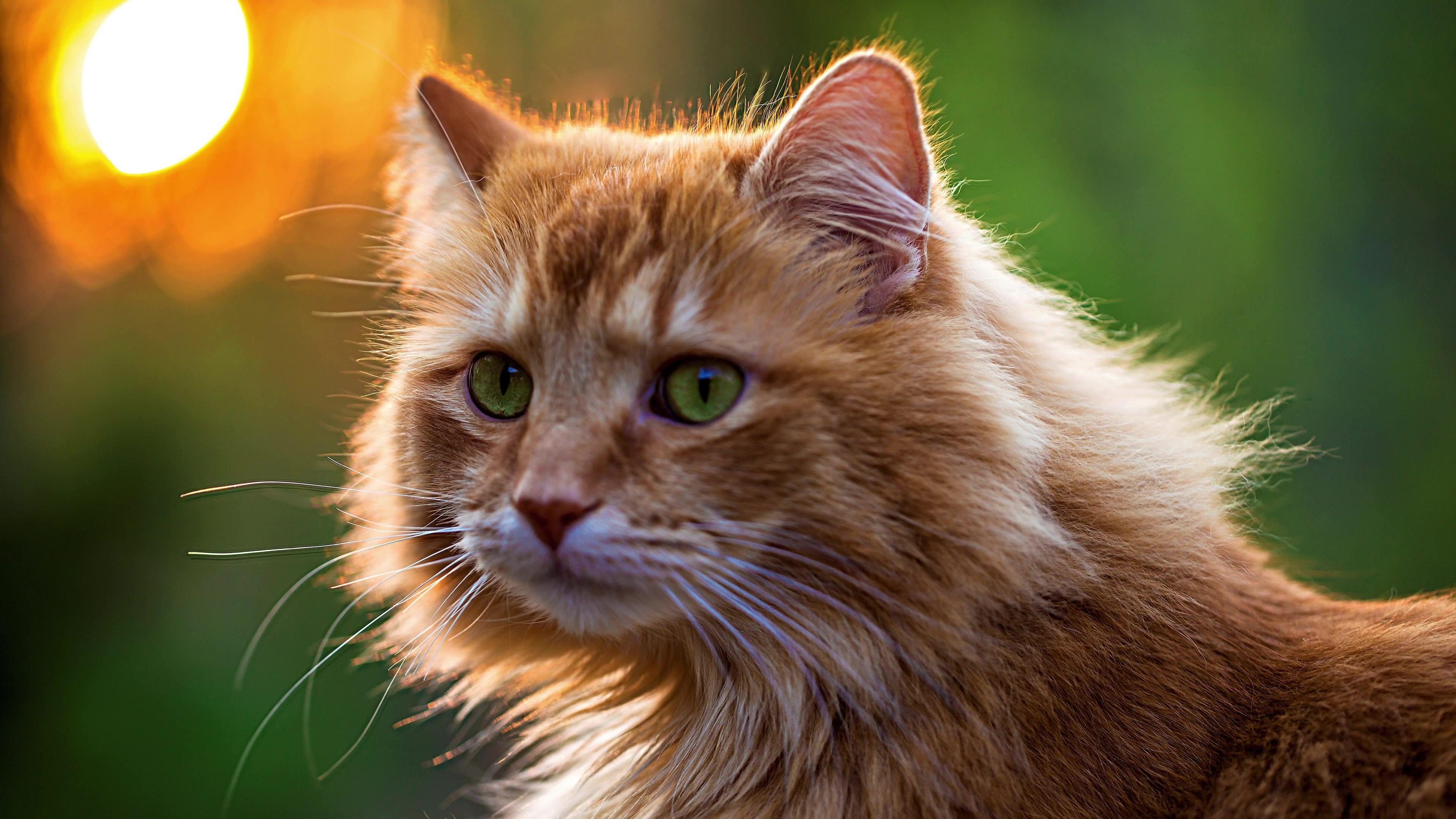 Gatos Cats Salvapantallas Wallpapers HD 4K UHD Ultra High