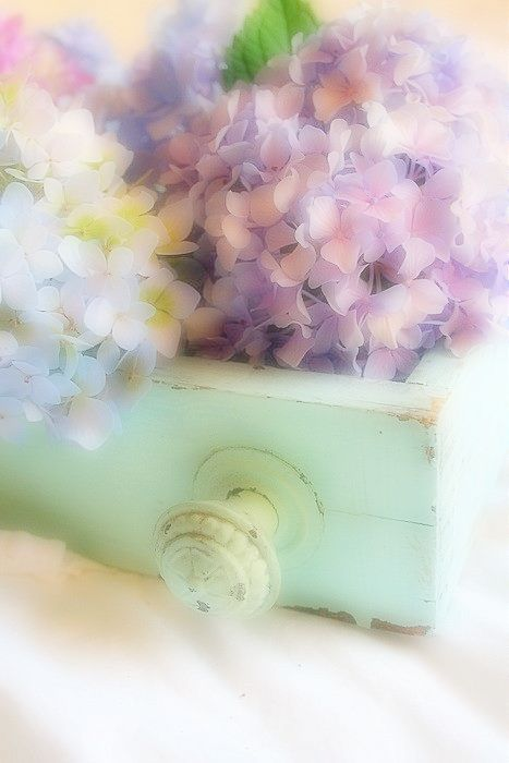 using a pastel painted drawer as a container. Beautiful in the cottage garden or on a country cottage porch