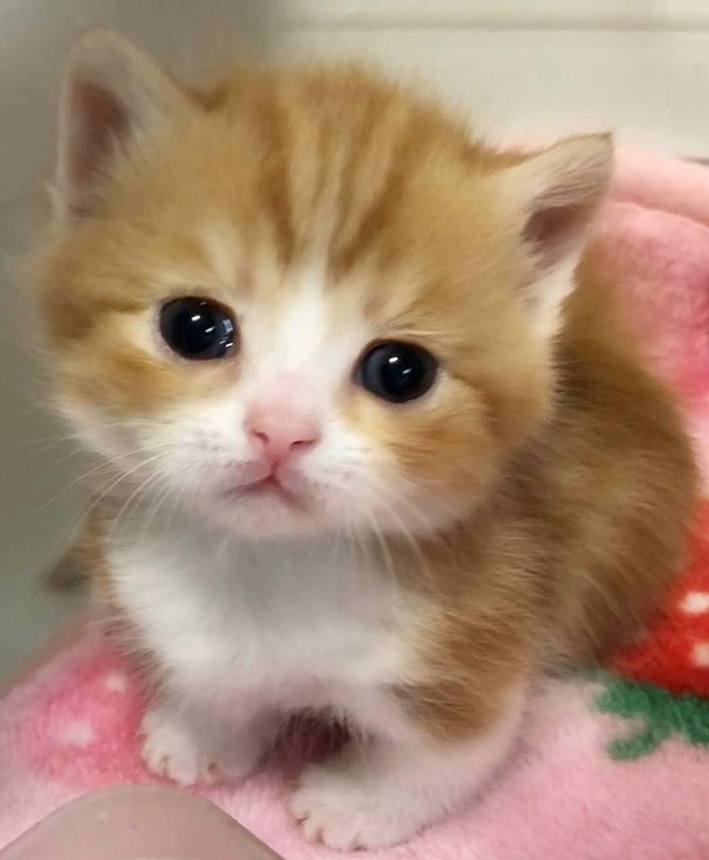 Https Www Facebook Com Lovemycat999 Photos A 975600442484370 1073741829 975520189159062 1757908127586927 Type 3 Thea Cute Baby Cats Cute Cats Kittens Cutest