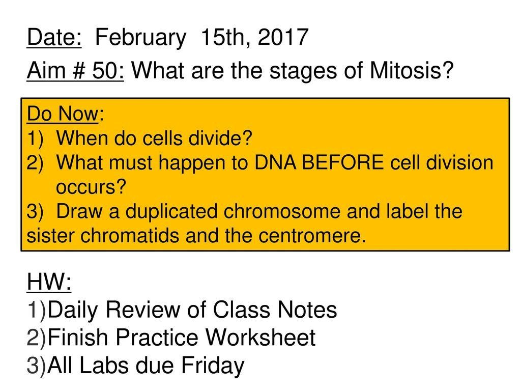 Cell Cycle Review Worksheet Aim 50 What Are The Stages Of