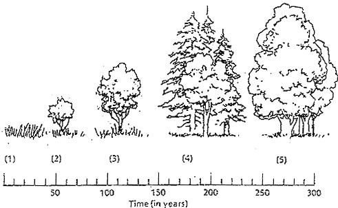 Examining the Stages of Succession   Ecological succession ...
