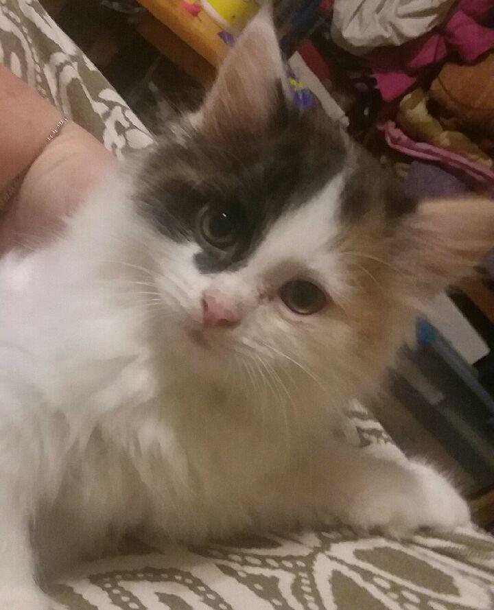 Adopt Blair On Cat Adoption Help Homeless Pets Homeless Pets