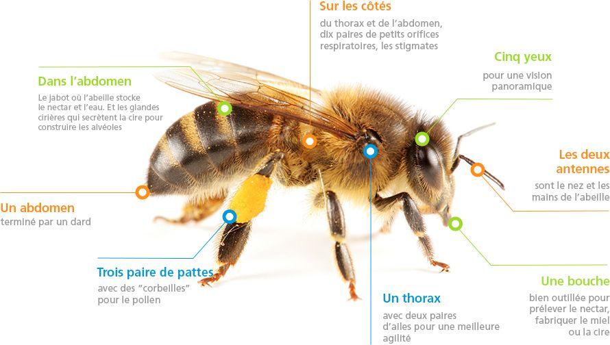 les abeilles unaf abeilles sentinelles la ruche pinterest les abeilles et abeilles. Black Bedroom Furniture Sets. Home Design Ideas