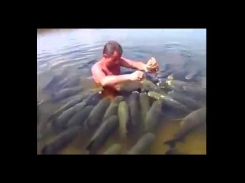 Cria o de peixes tilapia e tambaqui cria o de peixes for Como criar tilapias
