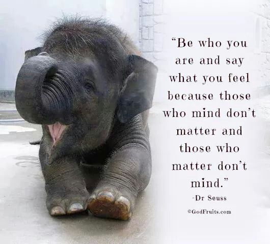 Elephant Quotes Awesome Funniest Elephant Quotes MOST FUNNIEST ELEPHANT QUOTES Pinterest