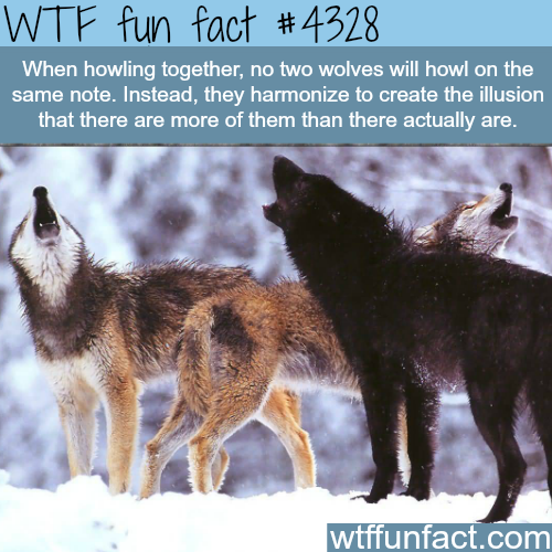 Wtf Fun Fact Did You Know Pinterest
