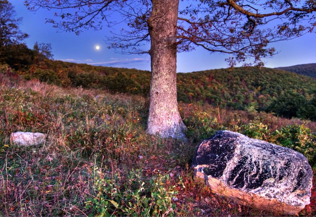 Another Moonlit Meadow (HDR)