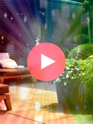 40 Best Black Plants and Flowers to Add Drama and Make Awesome Black Garden No 40 Best Black Plants and Flowers to Add Drama and Make Awesome Black Garden No 40 Best Blac...