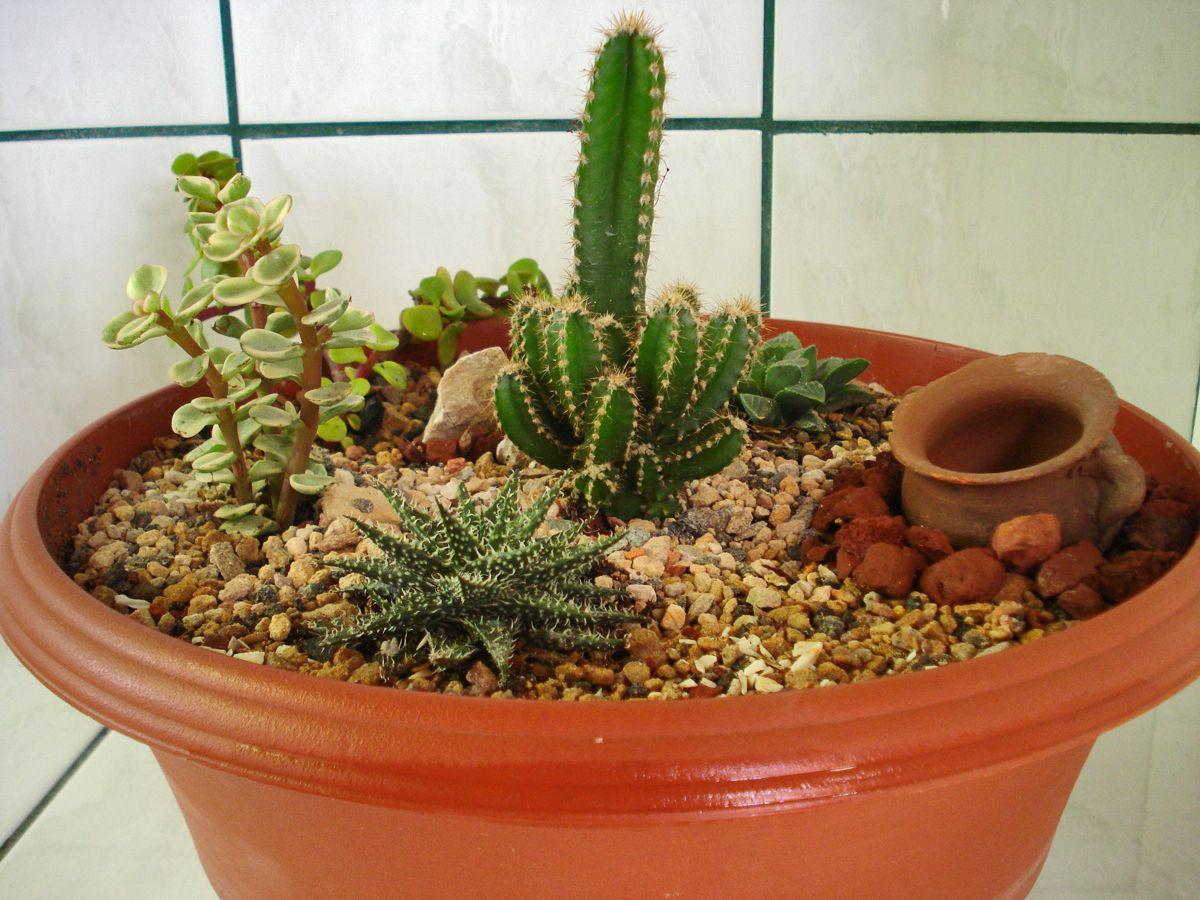Mi mini jardin de cactus p jardin pinterest cacti for Jardines con cactus