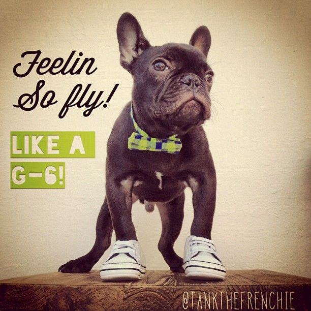 And You Look It Too French Bulldog Pictures Bulldog French