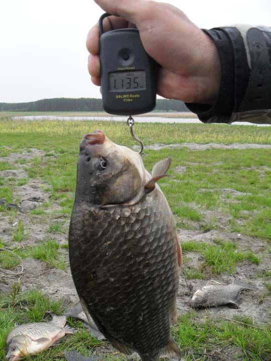 ловля карася осенью фото видео | рыбы | Pinterest