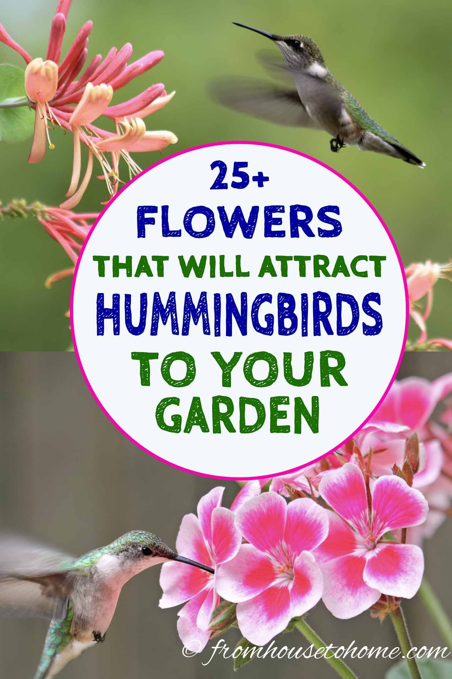 hummingbird plants: 25+ of the best flowers that attract