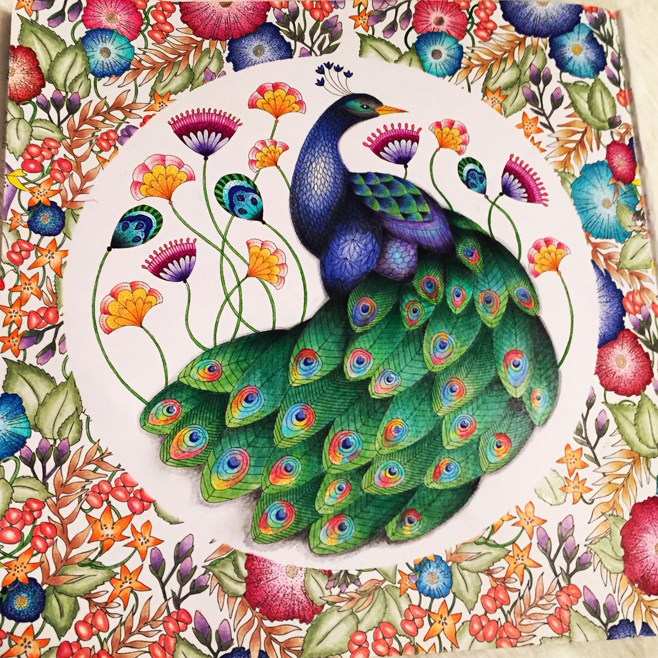 Finished Peacock From The Millie Marotta Animal Kingdom Colouring Book By Instagram Millie Marotta Coloring Book Animal Kingdom Colouring Book Coloring Books