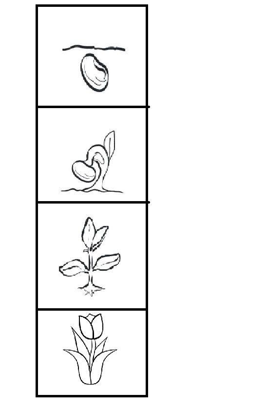 Olusum Lale Bitki Boyama Sayfalari Ekoloji