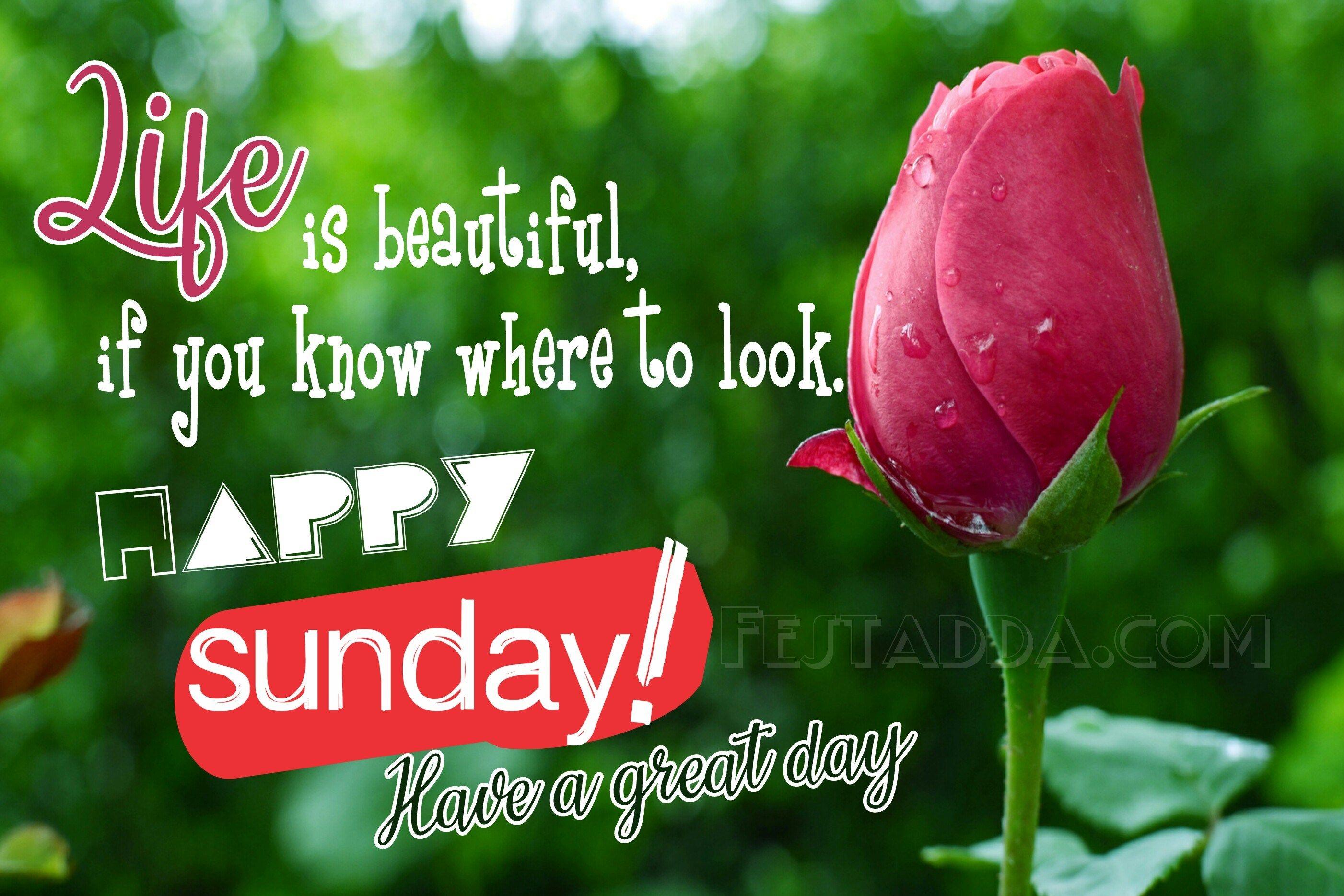 Happy Sunday Images For Whatsapp Status Hd Happy Sunday