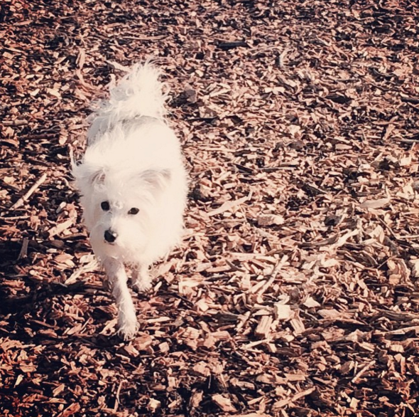 Day out at Hill Street Park Dog Park - Hamilton, ON - Angus Off-Leash #dogs #puppies #cutedogs #hamilton #ontario #smalldogs #dogparks #angusoffleash