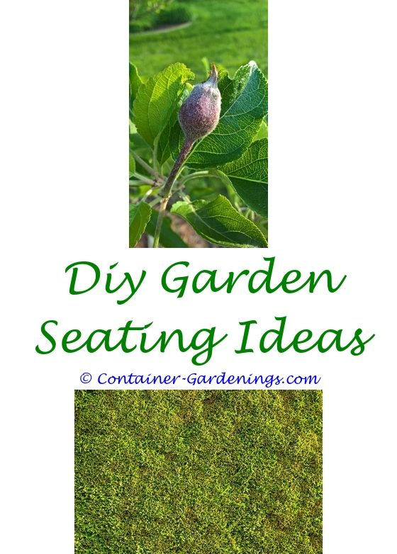 Container Gardening Designs | Garden ideas, Knockout roses and Gardens