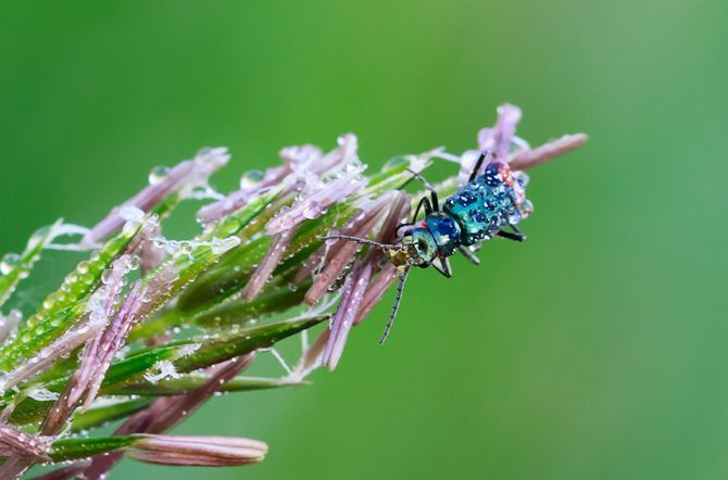 Photographer Heinz Maier – macro insects