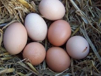 Chicken Eggs, SOY-FREE