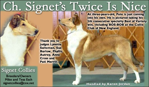 Ch Signet S Twice Is Nice Rom Signet Nice Three Year Olds