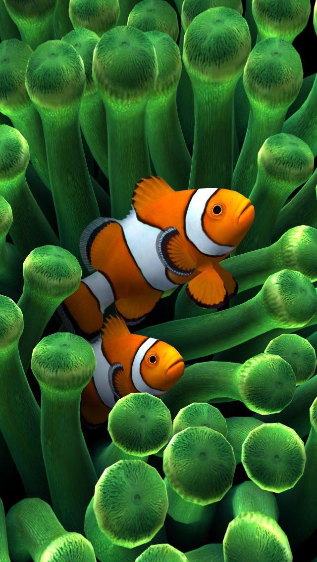 Sim Aquarium Anemone Clownfish Beautiful Sea Creatures Clown Fish Fish Wallpaper