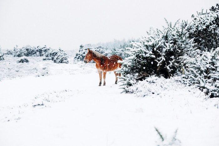 fond ecran animaux âne au milieu de la neige et des arbustes enneigés aux alentours photo neige qui tombe #fondecranhiver fond ecran animaux âne au milieu de la neige et des arbustes enneigés aux alentours photo neige qui tombe #fondecranhiver